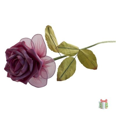 Roos fuchsia